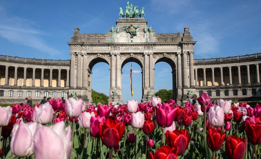 tulip field amongst architecture
